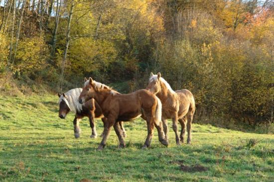 chevaux dans les gorges
