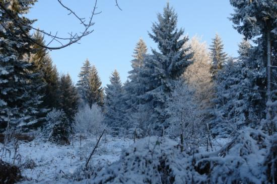 givre dans la forêt