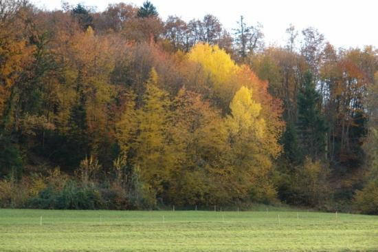 couleurs d'automne près de la maison