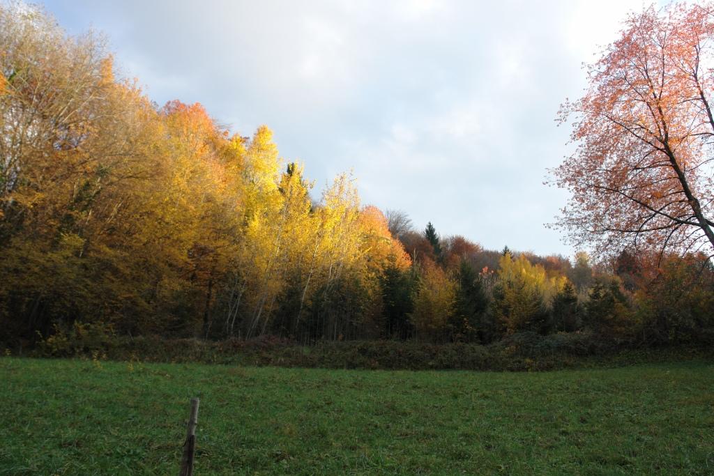 phot-automne-et-couch-de-sol-a-la-fag-027-1itzm.jpg